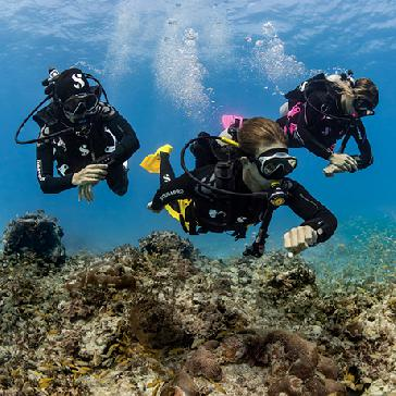 Dive Guide / Divemaster